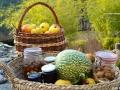Stages de cuisine proposés par Terre Vivante